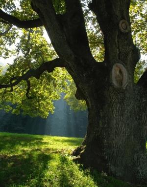 Bild eines Baumes